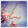 Thumbnail image for Instagram Obsession and Insights + IG Tips App
